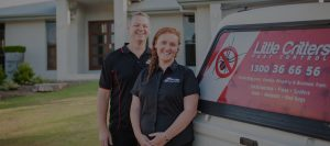 pest control sunshine coast pest removal and termite inspections