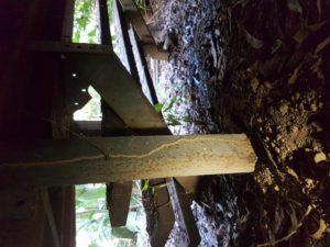 Ants-Termites-Inspections-Sunshine-Coast