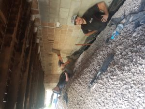 Buderim-Pest-Inspection-and-Removal