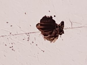 Pest-Control-Mooloolaba