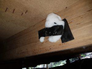 Termite-Inspection-Caloundra
