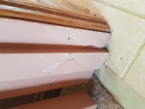Termite-Inspection-Company-Sunshine-Coast