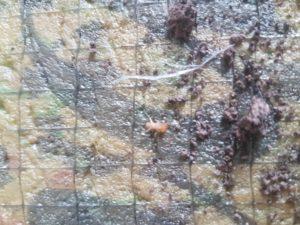Termite-Inspection-Mooloolaba