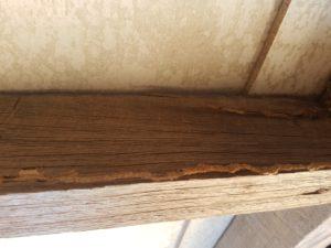 Termite-Inspection-Sunshine-Coast