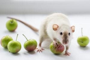 inviting-critters - pest control caloundra