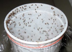 Pest Control Tewantin Termite Inspection Tewantin QLD