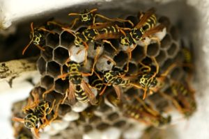 Nesting Insects tips - termite management sunshine coast