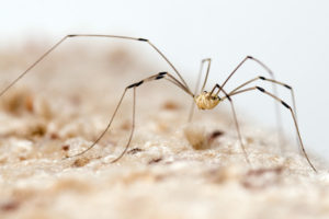 Know your spiders - Nesting Insects tips - Pest Control Tewantin Termite Inspection Tewantin QLD