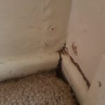 Pest Control Coolum Termite Inspection Coolum QLD