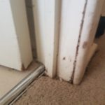 Pest Control Tewantin Termite Inspection Tewantin QLD