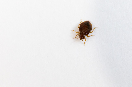 How To Get Rid Of Bed Bugs Fast Bed Bug Control And Removal