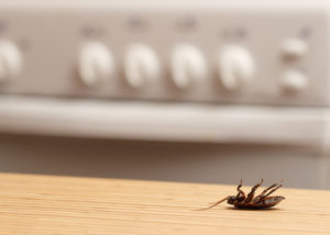 cockroach control sunshine coast - cockroaches management and removal services qld
