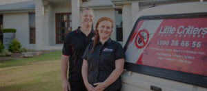 best pest control company sunshine coast qld - termite inspections and management - pest removal sunshine coast