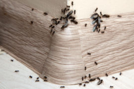 bug control sunshine coast - moths, ants, cockroaches termites wasps removal services qld