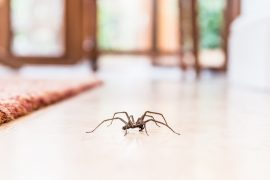 pest management sunshine coast - termite inspection and control - how to get rid of rare pests - pest control sunshine coast