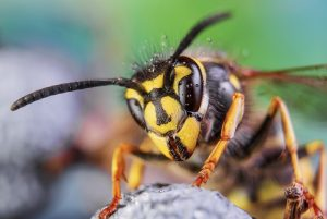 pest control in sunshine coast - termite inspection and management - get rid of summer pests - pest removal sunshine coast