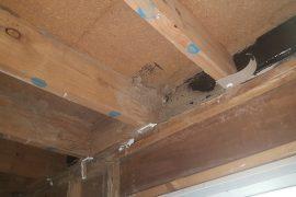 termite management sunshine coast - pre-purchase inspections - termite barrier systems sunshine coast