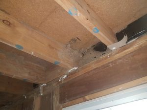 termite management sunshine coast - pre-purchase inspections - termite barrier systems sunshine coast