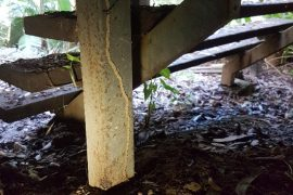 pre-purchased termite inspections sunshine coast - termite management and treatment services