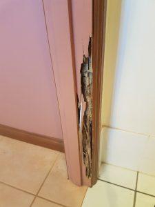 Termite management systems sunshine coast - termite inspections - termite management services