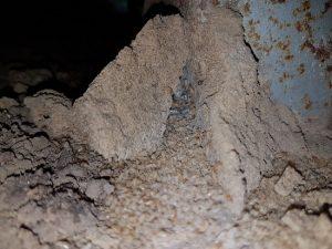 termite-barrier-systems-sunshine-coast