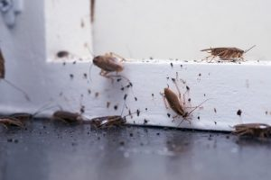 termite and pest control sunshine coast - termite management systems - barrier systems - termite inspections caloundra cooroy