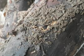 termite prevention sunshine coast - termite barrier system - control and treatment services
