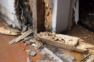 termite detection sunshine coast - pre purchase inspections - how to detect termites