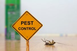 professional pest control sunshine coast - pest management inspection treatment and removal services