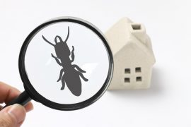 pest treatment sunshine coast - pest inspections management and removal services