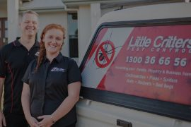 best pest control company sunshine coast - termite management companies - pest treatment and inspections sunshine coast