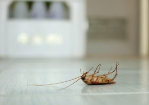 how often do i need pest control services sunshine coast - regular termite inspections and treatments