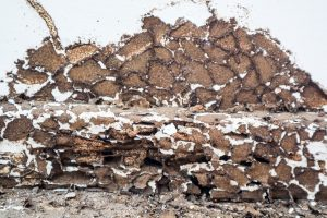 pre-construction termite treatment sunshine coast - termite management for new houses - inspections and barrier systems